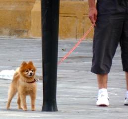 dog-on-leash