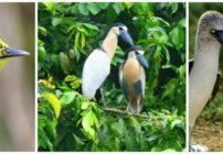 1st San Pancho Bird Diversity Festival