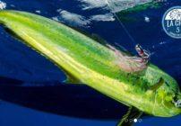 5th Annual De La Cruz International Sport Fishing Tournament